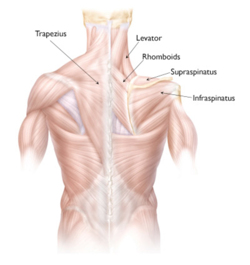 Shoulder Joint Ligament Injury