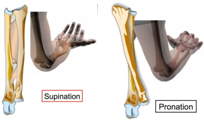 Supination pronation